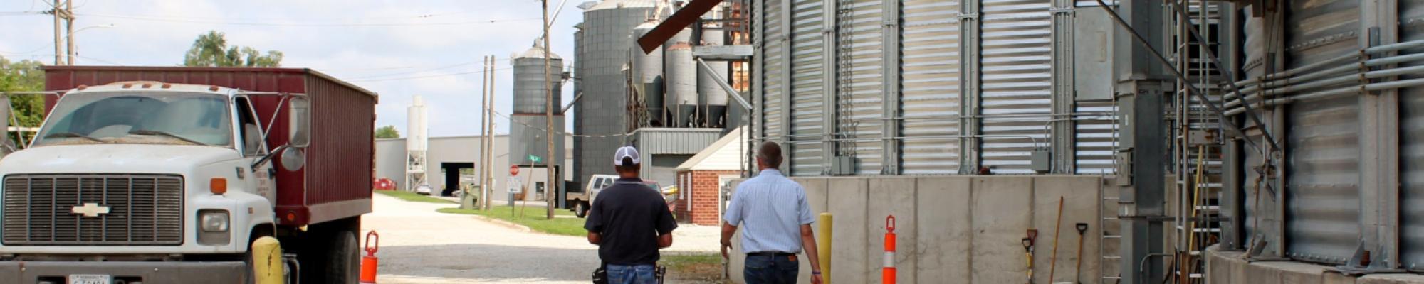 Grain Examination